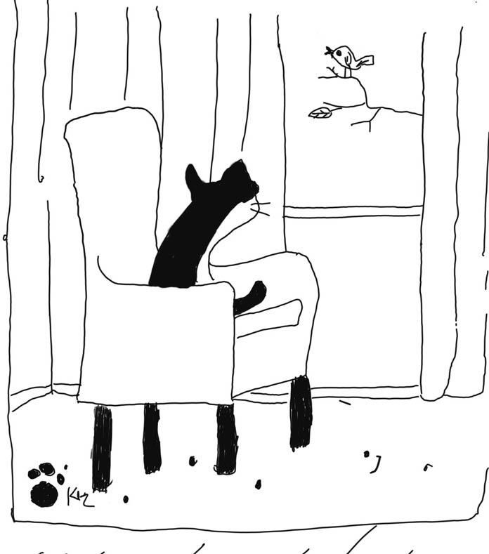 chuyện tình của một con mèo
