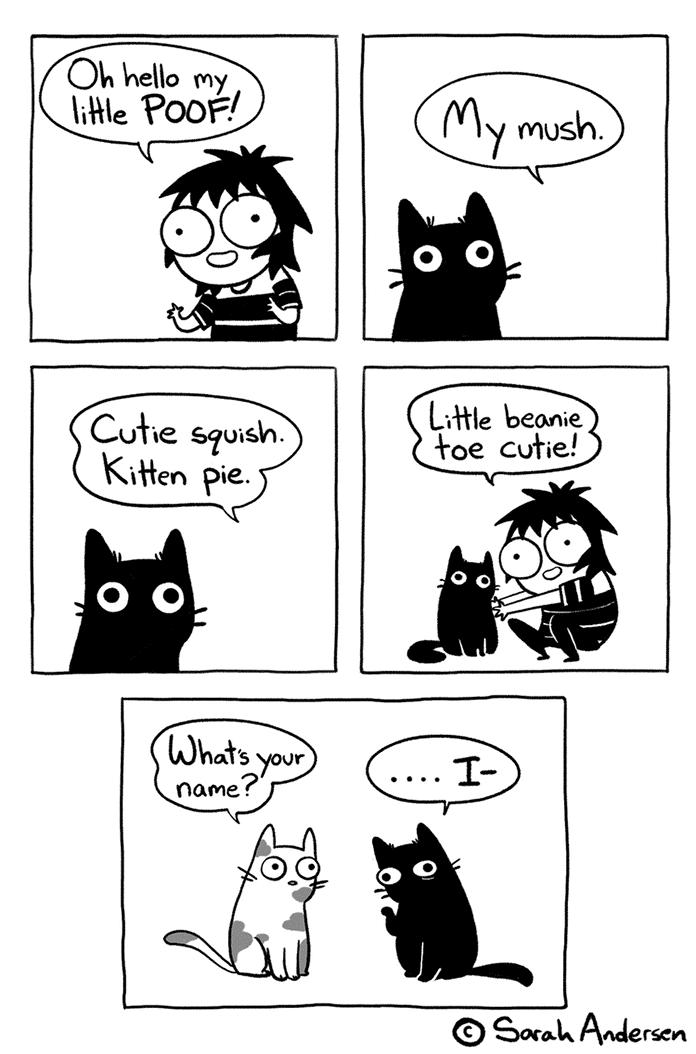 mèo có biết tên chúng không